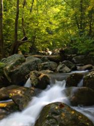 The sounds of nature can soothe tinnitus.