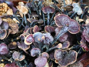 Medical News Today: Everything you need to know about reishi mushrooms