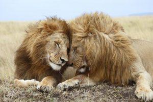 Same-sex sexual behavior in animals: Do we have it all wrong?